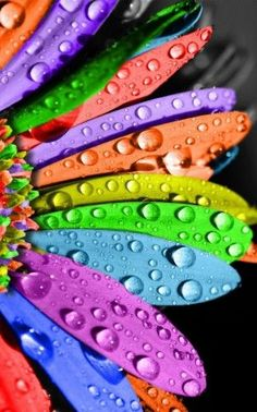 by Alexandria Griffin. rainbow flowers, rainbow colors and colorful flowers.