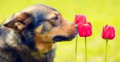 9 Things You Should Never Have in Your Garden If You Are An Animal Lover, And 3 Things You Should! | The Animal Rescue Site Blog