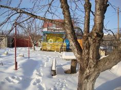 Уход за деревьями в феврале: лечение морозобоин и защита от ожогов