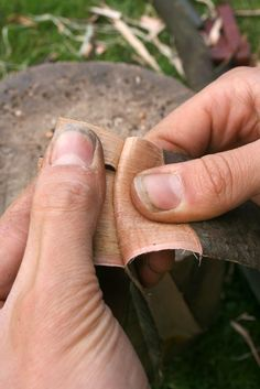 How to process willow bark for cordage making fibres - Surely one of the best cordage materials; Willow bark is both abundant and relatively easy to process Basket Braid, Basket Weaving, Birch Bark Crafts, Wood Crafts, Crafts To Make, Arts And Crafts, Diy Crafts, Birch Bark Baskets, Willow Furniture