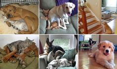 The love-hate relationship between cats and dogs