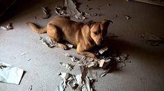 Lead marketing Dog of aboalarm & kontoalarm erledigt seinen Papierkram pünktlich zum #Wochenende.