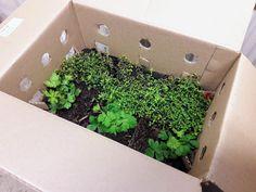 Koivikon Katveessa: Päivän puutarhafiilikset