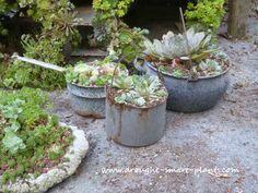 unique succulent planters, container gardening, flowers, gardening, succulents, Vintage Blue Granite Ware