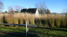 vision champêtre  du  moulin