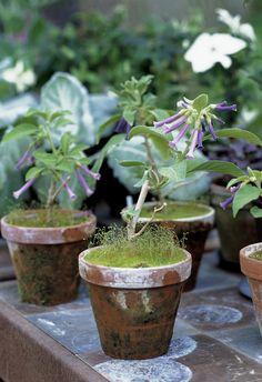 Clemmensen and Brok: Garden
