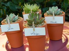 Succulent Wedding Favor, Succulent Bridal Shower Favor, Rustic Wedding Favor, Mini Terra Cotta Favor, Garden Party Favor, Fundraising Event. $36.00, via Etsy.