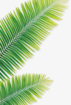 Wallpapers Verdes, Green Leaves, Plant Leaves, Cute Pastel Wallpaper, Aesthetic Space, Plant Painting, Plant Illustration, Landscape Prints, Surf Art