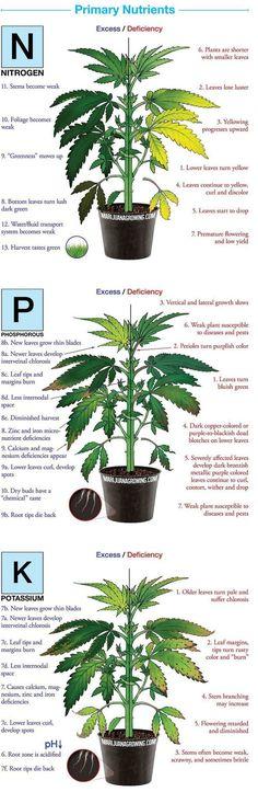19 Best Growing Weed Images On Pinterest Marijuana Plants
