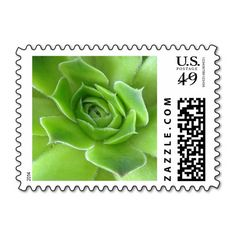 These personalizable /customizable green #succulent plant #postage #stamps brighten up any correspondence. Especially pretty to send #wedding, #bridal #shower, engagement #party, vow renewal, or anniversary #invitations, #announcements, save the dates, RSVPs, and thank you notes. Available in horizontal or vertical format and fully customizable (add names, dates, or any text in your favorite font and color). #stamp #floral #postal