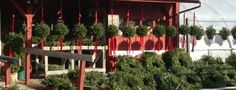 holiday cheer at the farmstand