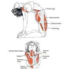 背中とお尻の筋肉を伸ばす!全身の血行を改善して代謝、免疫力、脂肪燃焼効率をアップ!猫背、肌荒れ、むくみ、冷え、肩こり、腰痛の予防に利く!