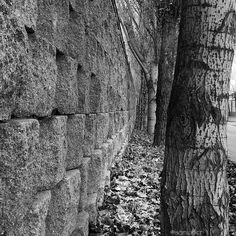 Entre la pared y los árboles. Perspectiva.