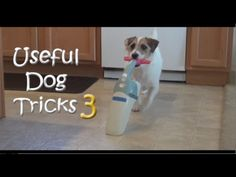 "More Useful Dog Tricks With Jesse The Jack Russell. JRT's thrive on work. A successful ""master"" understands this premise."