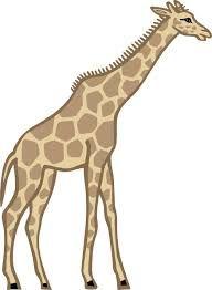 Ez a zsiráf egy kicsit vicces !