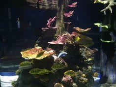 Arcade, Port Elizabeth, Aquarium, Spain, Santiago De Compostela, Goldfish Bowl, Aquarium Fish Tank, Sevilla Spain, Aquarius