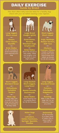 Best Canadian Dog Foods For Sensitive Stomachs