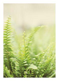 fern1 by Stacy Cooke