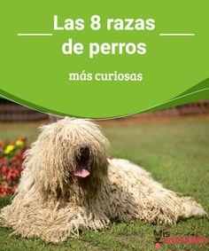 Las 8 razas de perros más curiosas  Posiblemente sepas que dentro del reino canino la variedad está a la orden del día, te presentamos las 8 razas de perros más curiosas. #razas #curiosidades #caninos