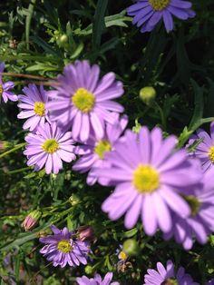 Van deze kleine bloemetjes word ik blij...