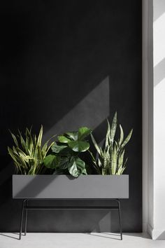 A planter meant for more. Designed by Norm Architects, the Park planter shows off your office greenery or stores away your books and supplies. Interior Design Plants, Plant Design, Garden Design, House Plants Decor, Plant Decor, Indoor Planters, Indoor Garden, Flower Planters, Industrial Office Design