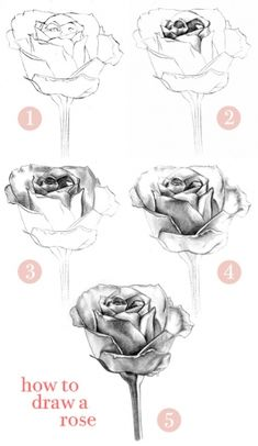 art desenho How to Draw a Rose: Learn to Draw Rose Pencil Drawings Pencil Drawing Tutorials, Art Tutorials, Roses Drawing Tutorial, Pencil Drawings For Beginners, Drawing Sketches, Art Drawings, Flower Drawings, Drawing Tips, Sketching