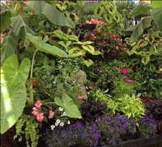 Summer display in our perennial house. Perennials, Display, Garden, Plants, Summer, House, Floor Space, Garten, Summer Time