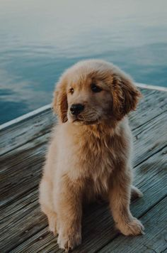 10 Adorable Puppies Playing In Their First Snow [PICTURES] – Dogtime 10 Adorable Puppies Playing In Their First Snow [PICTURES] – Dogtime,PUPPY Related posts:.süße welpen, entzückende hunde, schöne tiereThe top 25 most intelligent. Super Cute Puppies, Cute Baby Dogs, Cute Little Puppies, Cute Dogs And Puppies, Cute Baby Animals, Adorable Puppies, Doggies, Puppies Puppies, Wild Animals
