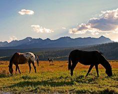 Sawtooth Mountains | Sawtooth Mountains | Flickr - Photo Sharing! Sawtooth Mountains, Idaho, Explore, Nature, Travel, Animals, Naturaleza, Viajes, Animales