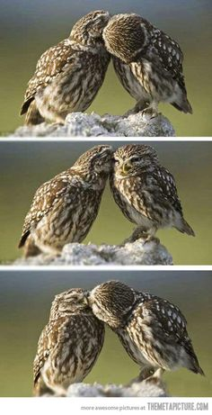 True fact: Owls mate for life, and often grieve themselves to death when their mate dies. That is true love!