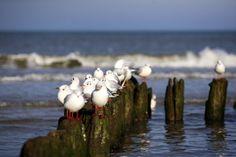 Ptaki I Birds #bałtyk #morze #baltic #sea #seaside #poland #polska #visitpoland #seeuinpoland