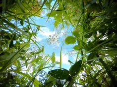 Perspektivenwechsel - Ausblick #MichaelDeutschmann #Mentalcoaching #Hypnose #Seminare #MentalAustria Fruit, Plants, Perspective Photography, Plant, Planets