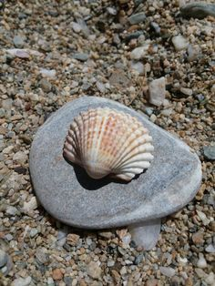 Shell Snail, Shells, Stuff To Buy, Animals, Conch Shells, Animaux, Seashells, Snails, Animal