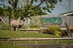 Chester Zoo flooded with donations as bosses warn it is 'at risk of extinction' - Liverpool Echo