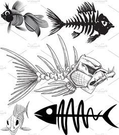 skeleton of five different fish. My collection of fish skeleton. Transparent PNG, Big JPG and vector EPS in archive Skeleton Drawings, Fish Skeleton, Fish Drawings, Art Drawings, Desenho New School, Different Fish, Cartoon Fish, Angler Fish, Desenho Tattoo
