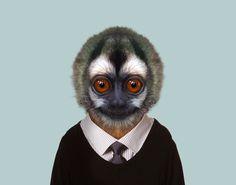 Gray-handed-Night-Monkey---Aotus-Griseimembra-copia