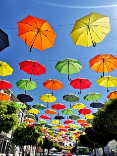 Colorful canopy