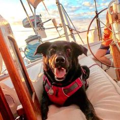 A beautiful boat dog sits on deck on a sailboat wearing a lifejacket. Buy A Boat, Make A Boat, Build Your Own Boat, Boat Building Plans, Boat Plans, Dogs On Boats, Boat Safety, Cabin Cruiser, Plywood Boat
