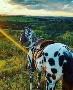 The best view of the world is seen between the ears of a horse, going over a fence Most Beautiful Horses, All The Pretty Horses, Cute Horses, Horse Love, Horse Photos, Horse Pictures, Beautiful Creatures, Animals Beautiful, Animals And Pets
