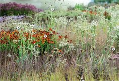 Piet Oudolf's meadow at the Hauser & Wirth gallery in Somerset   Gardens Illustrated