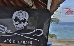 So proud to wear the black flag @seashepherd #seashepherd #conservedefendprotect #giliair #giliislands #gilitrawangan #lombok #bali #indonesia #diving #scubadiving #padi #instadive #padicourses #discoverscubadiving #marinelife #travel #nature #naturelovers #sea #sealovers #ocean #oceanlovers #instapic #instadive #instatravel #asia #divingasia #divingindonesia #diver