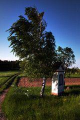 Auf einem weiten Feld im Vordergrund eine Birke und eine kleine Kapelle Felder, Plants, Pictures, Birch, Plant, Planets