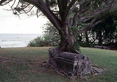 Crypt and tree merge in an old cemetery in Kalaupapa National Park in Hawaii.
