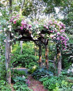 climbing rose vine