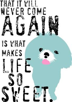that it will never come again is what makes life so sweet. (shih tzu)