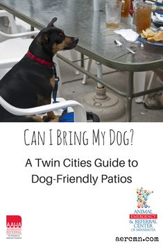 It's finally patio season here in the Twin Cities! If you plan to bring your dog to any local patios, be sure to check out our list of dog-friendly patios in the Twin Cities and some etiquette tips!  Read more here: http://aercmn.com/blog/posts/can-i-bring-my-dog-a-twin-cities-guide-to-dog-friendly-patios/  #dogs #dogfriendly #twincities #saintpaul #minneapolis #minnesota #dogfriendlypatio #summer