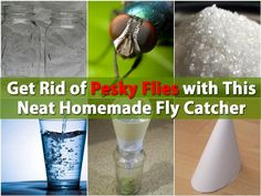 get rid of pesky flies with this neat homemade fly catcher. Black Bedroom Furniture Sets. Home Design Ideas