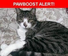 Please spread the word! Cornelius was last seen in King of Prussia, PA 19406.    Nearest Address: Near Meadow Ln & Pine Hill Rd