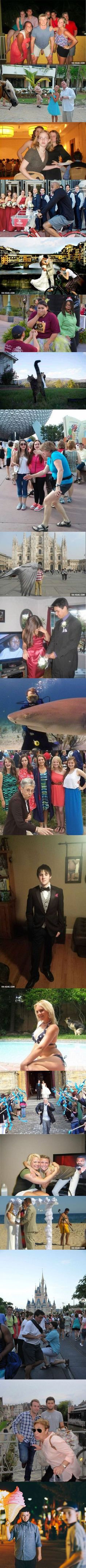 The 20 Majestic Accidental Photobomb