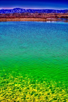 ✮ The Shallow End of Eaglewatch Lake - Denver, Colorado